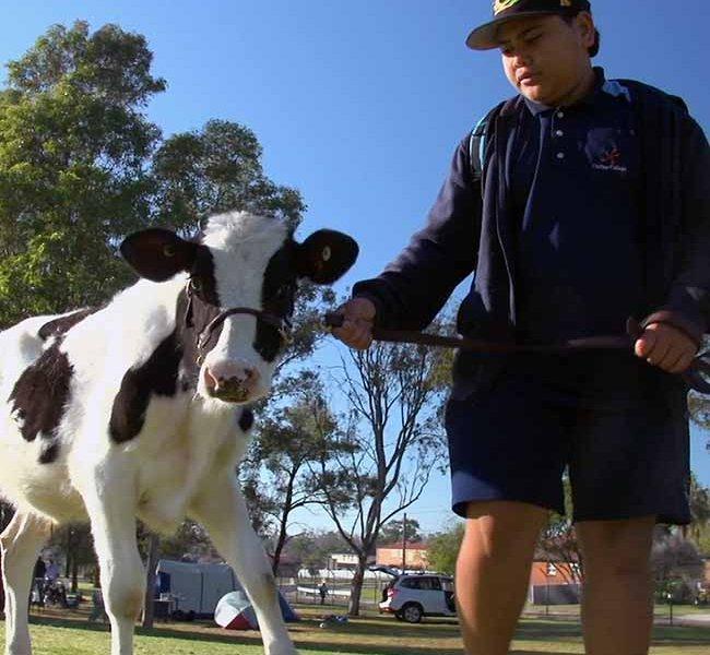 web calf